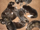 Puppies 2 Weeks